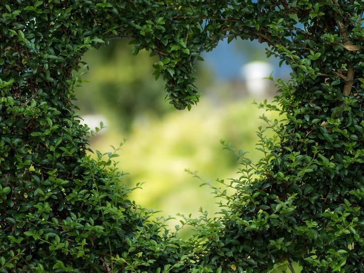 Ein Herz in einem grünen Busch
