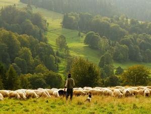 Ein Hirte und seine Schafe