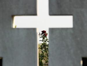 Kreuz und Rose - Tod und Leben