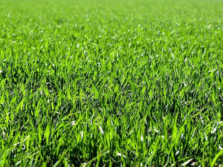 Blick auf eine grüne Wiese