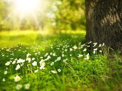 Symbolbild Sommer: Blumenwiese mit Sonne im Hintergrund.