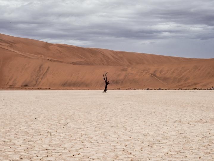 Wüste mit abgestorbenem Baum