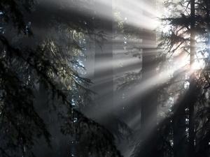 Sonnenstrahlen im dunklen Wald