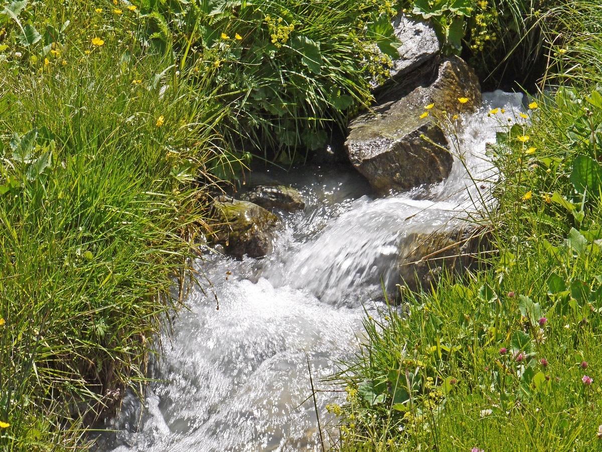 Wie Ein Fisch Im Wasser So Leben Wir In Gott