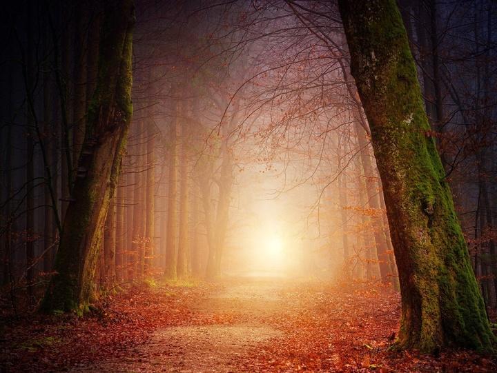 Erleuchtete Waldlichtung im Nebel
