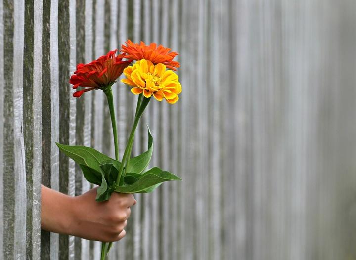 Wohnungsfenster mit Blumenvase