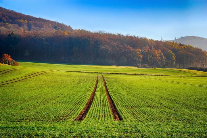 Feld mit aufgehender Saat