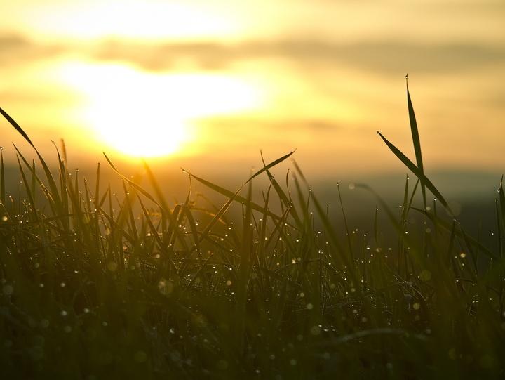 Gras mit Morgentau