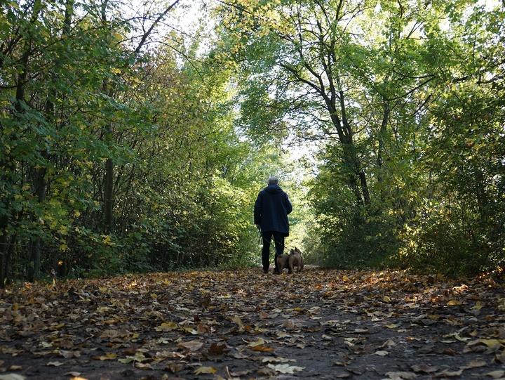 Ein Mann geht im Wald mit dem Hund spazieren.