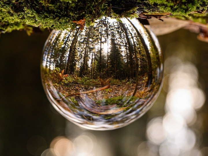Glaskugel im Wald