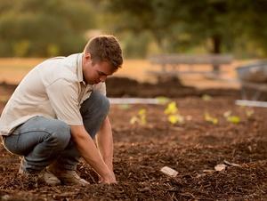 Mann gräbt in Erde